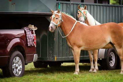 Lån penge til hestetrailer og hest