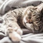 Lån til køb af katte